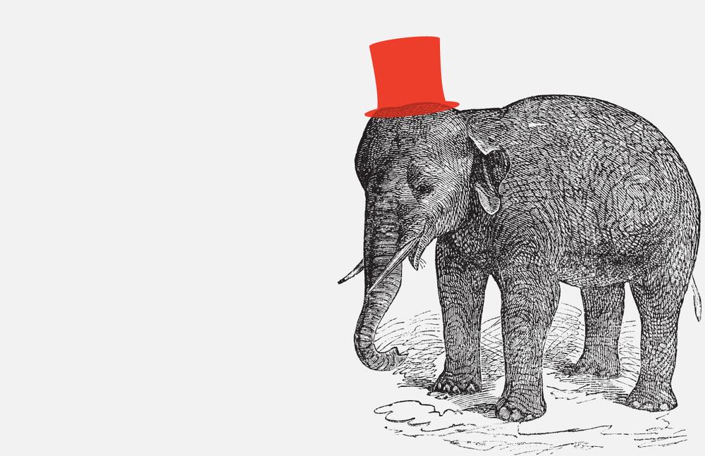 smak_Elephant_1.jpg