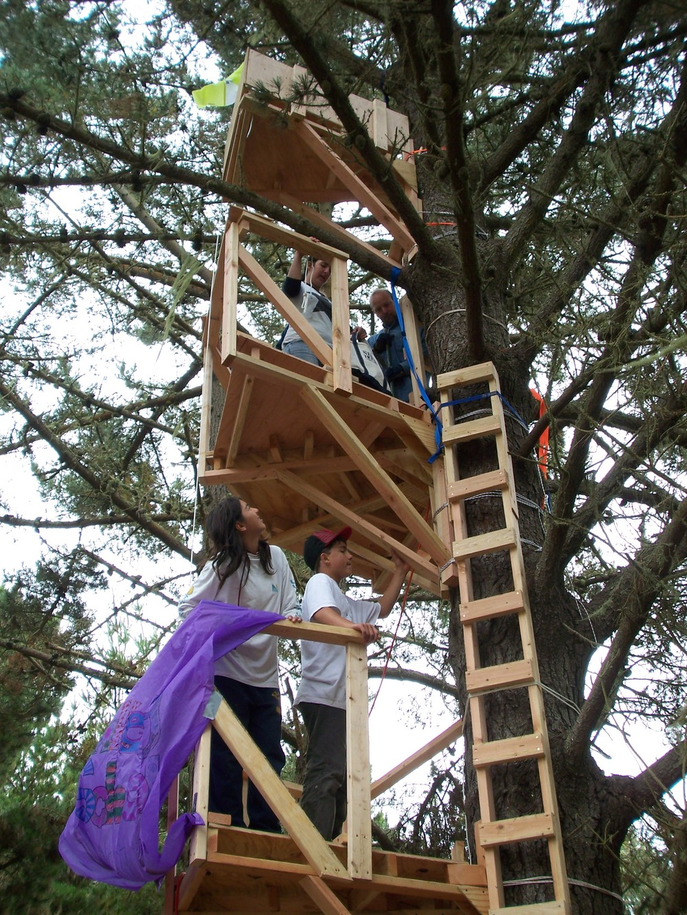 A three story tree-house takes shape