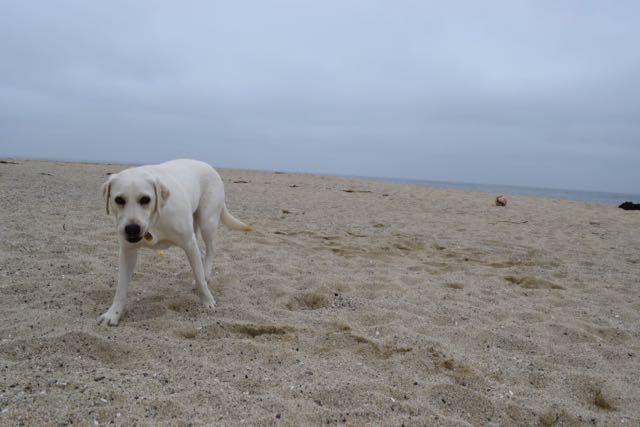 Portrait of a dog: Greta