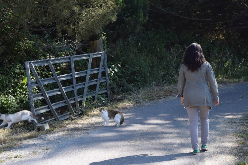 Sayuri leads the the scenic walk up to the build site, and comes across 2 lovely cats.