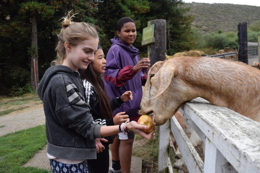 Charlotte feeds an eager goat.