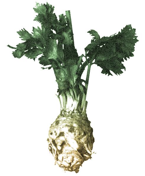 Roots_Celery-Root1.jpg