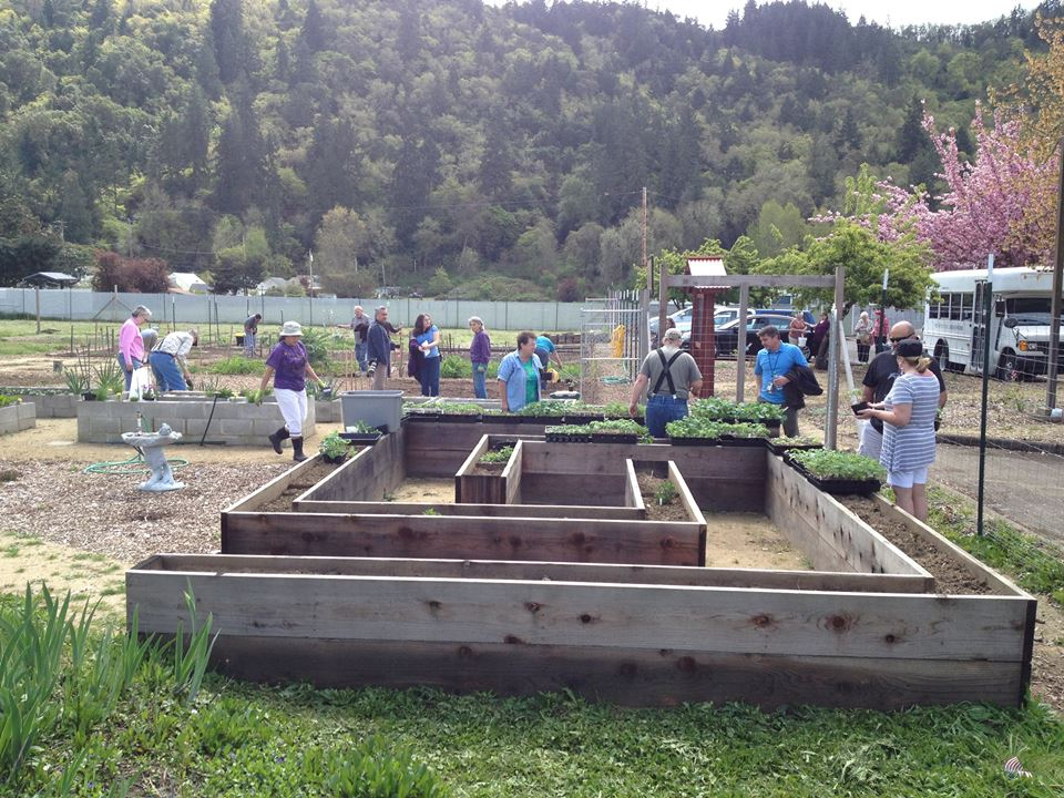 Planting day at westside community garden of roseburg.