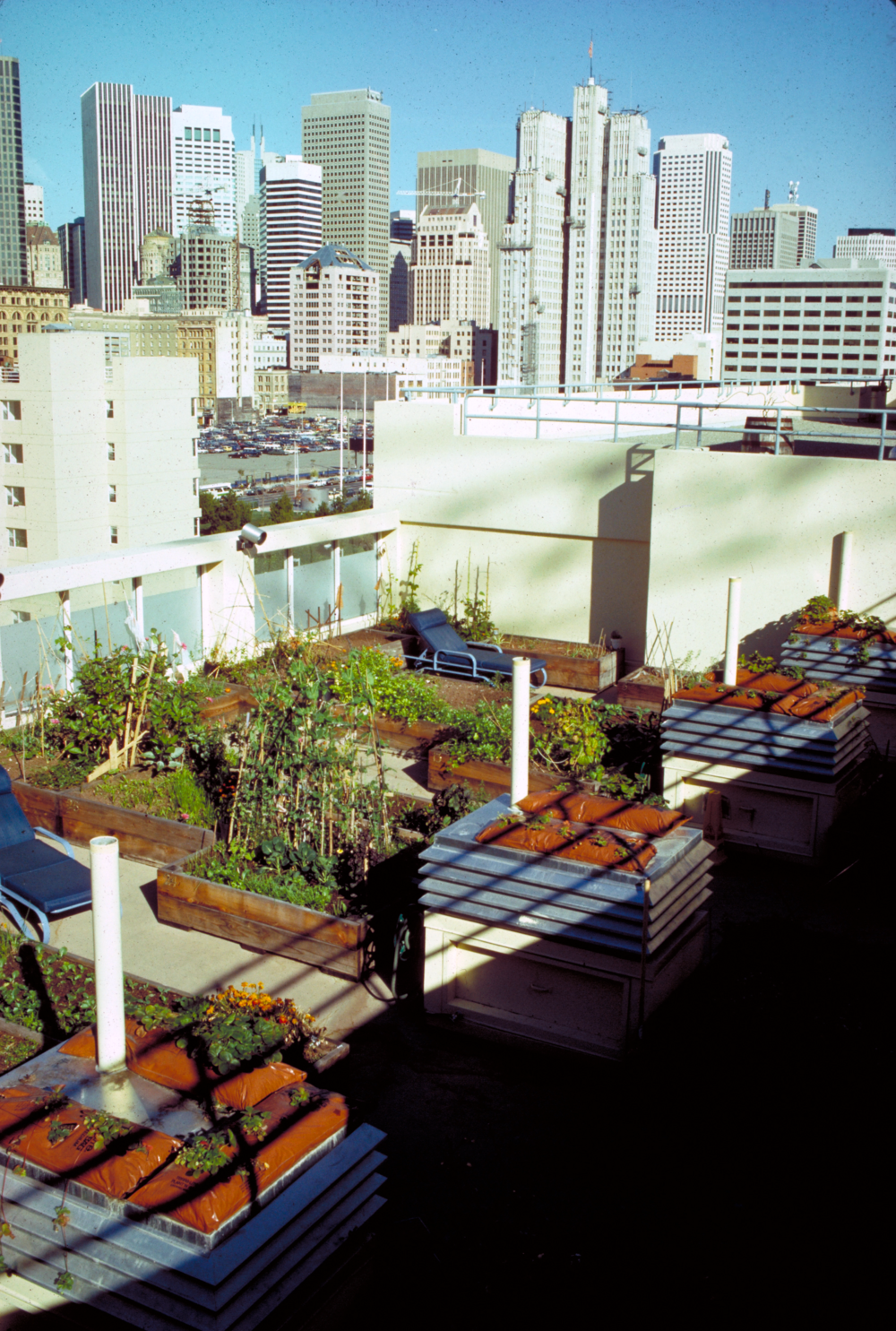 roof garden.png