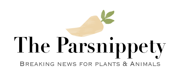 The Parsnippety