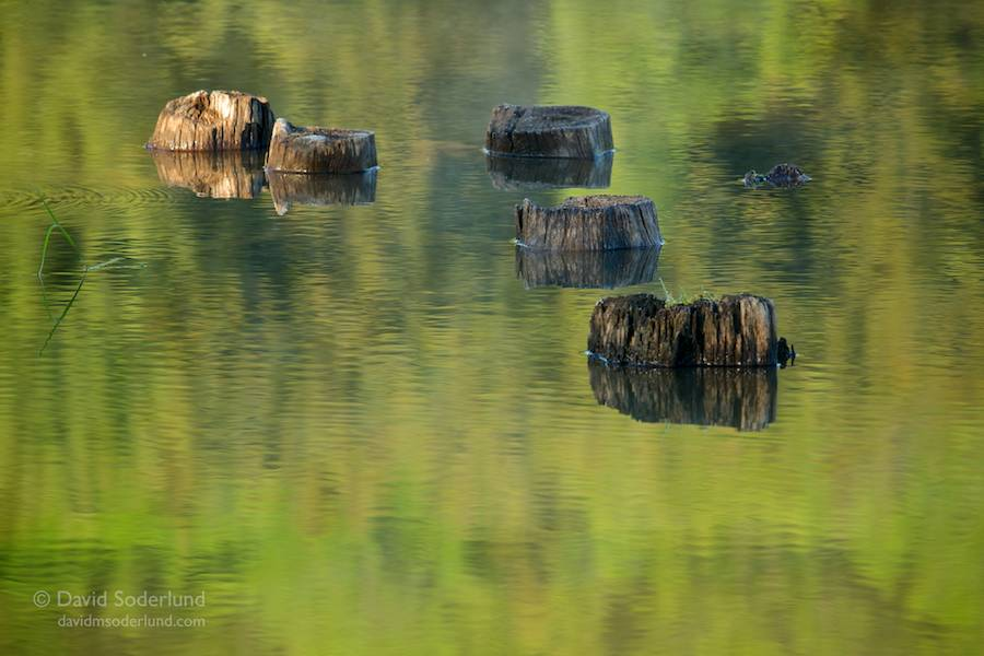 Morning reflections, Spruce Knob Lake, WV
