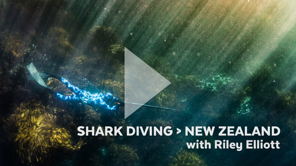 Justin Bastien shark diving in New Zealand for the Microsoft #DoMore Campaign with Riley Elliott.