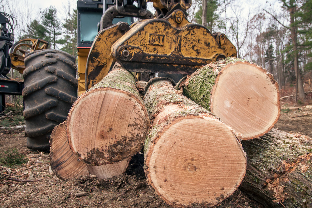 Timber Harvesting Maine Forest Management