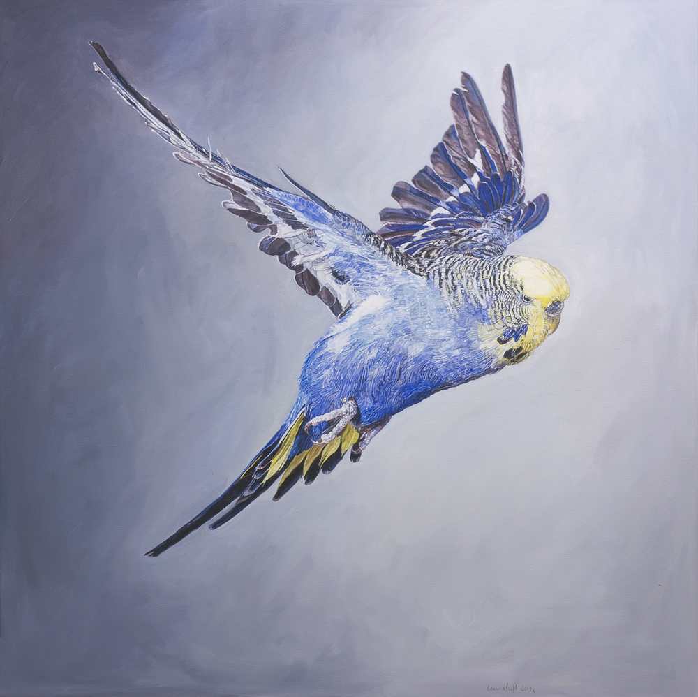 Ulrich Lamsfuss   Frank Greenaway, Blue Budgerigar with yellow head in flight, side view (gty im. #73507000), No. 2  , 2012   oil on canvas  49.21 x 49.21 inches 125 x 125 cm
