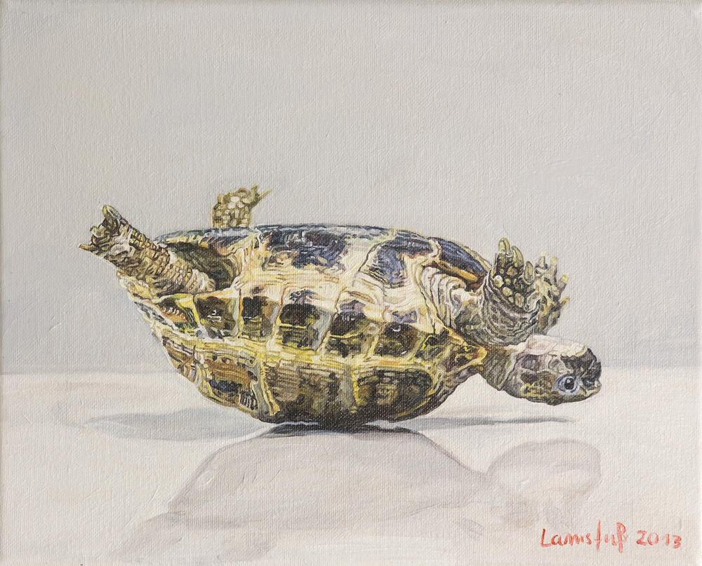 Ulrich Lamsfuss   The Turtle, iStockphoto #3668316 , 2013 oil on canvas 9.45 x 11.81 inches 24 x 30 cm