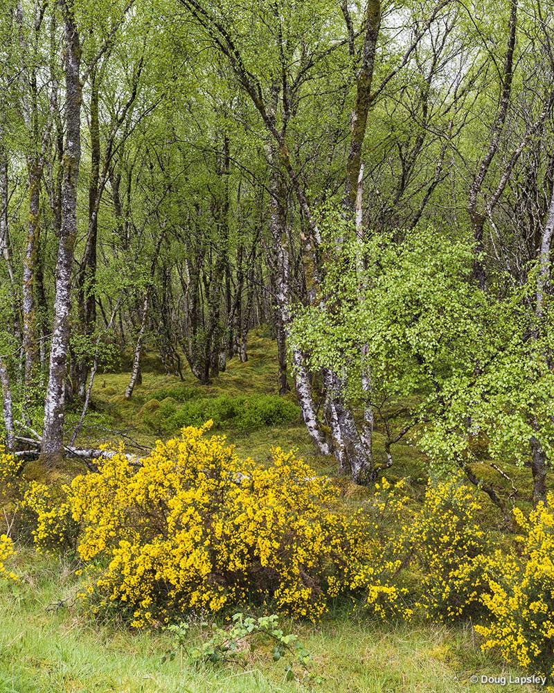 Woodland Kinloch Ewe