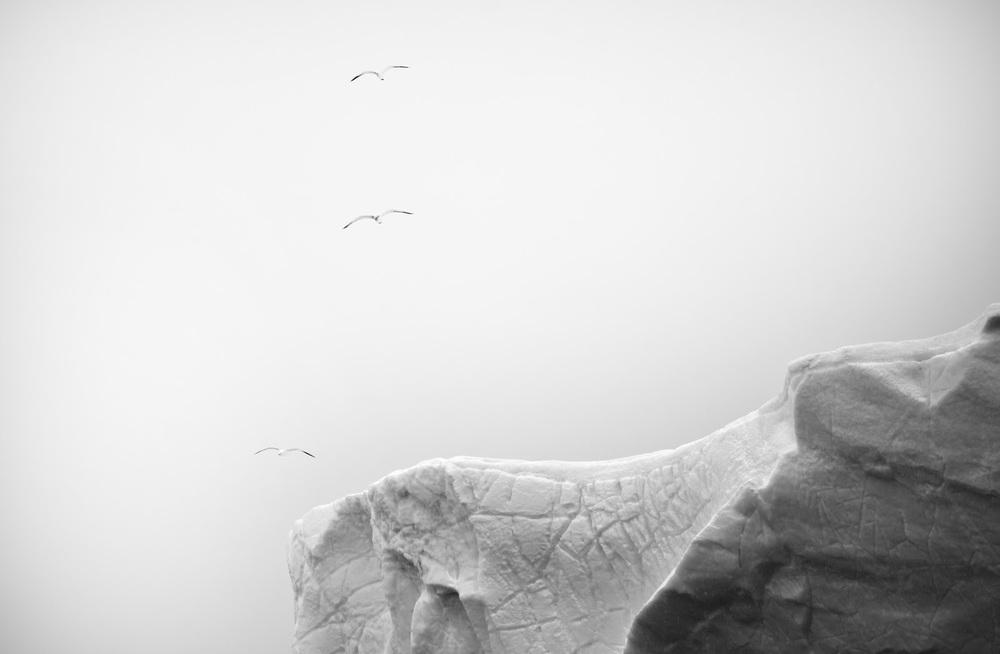 Threebirds.jpg
