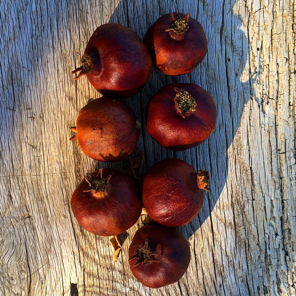 Some of his dried pomegranates from his tree, left over from winter.