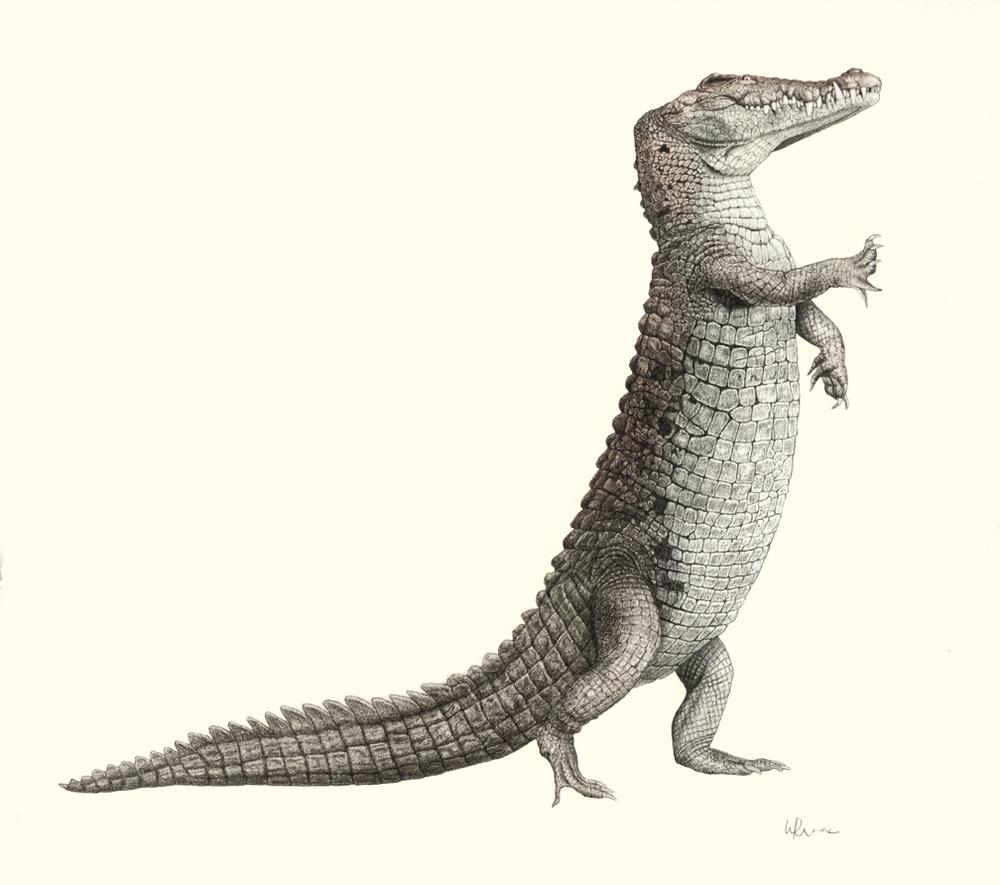 wrmoore :      Crocodile Villain     Character design/Graphite on Paper
