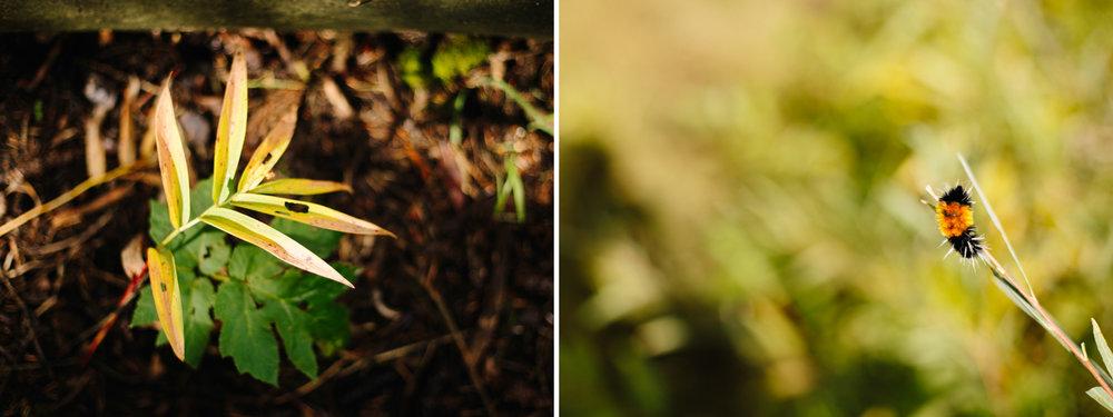 Telluride-Wedding-Photographer-1.jpg