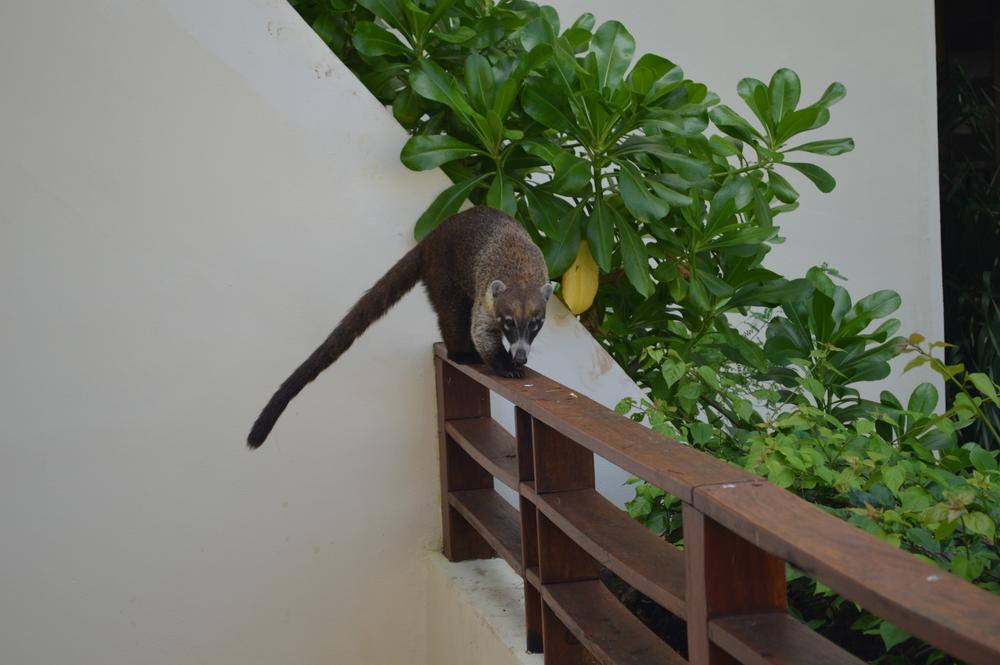 Encontré un intruso en mi balcón
