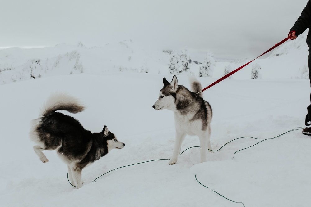 adventure-wedding-photographer-artist-point-snow-camping-elopement-photographer-huskies.jpg