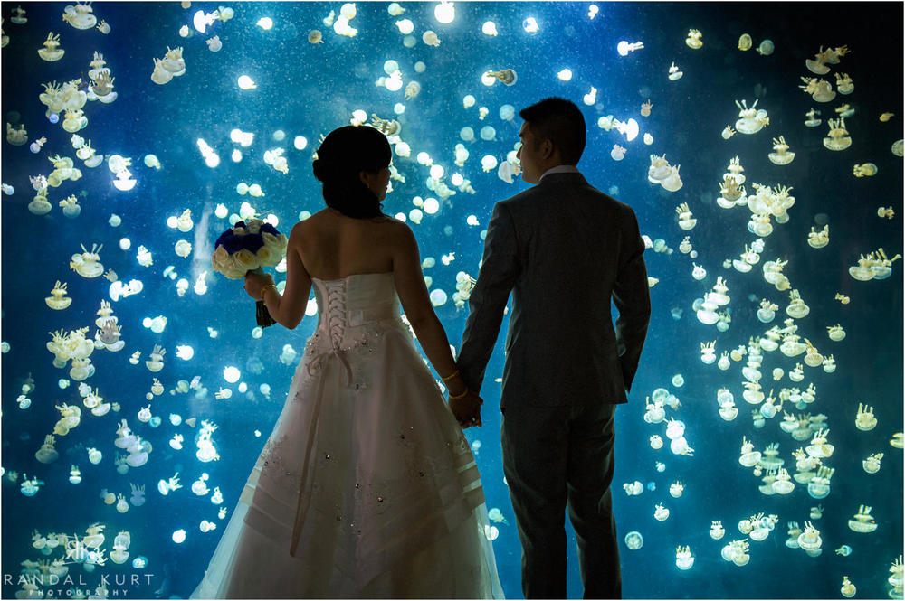 A Vancouver Aquarium wedding with Cindy and JJ. Photography by Randal Kurt.
