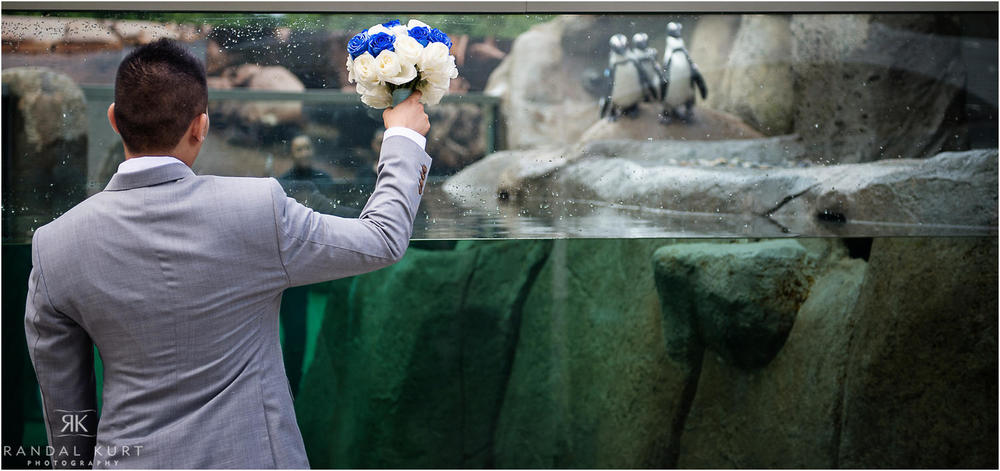 19-vancouver-aquarium-wedding-photography.jpg
