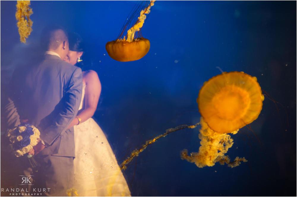 20-vancouver-aquarium-wedding-photography.jpg