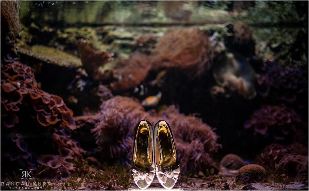 22-vancouver-aquarium-wedding-photography.jpg