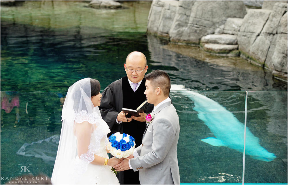 30-vancouver-aquarium-wedding-photography.jpg