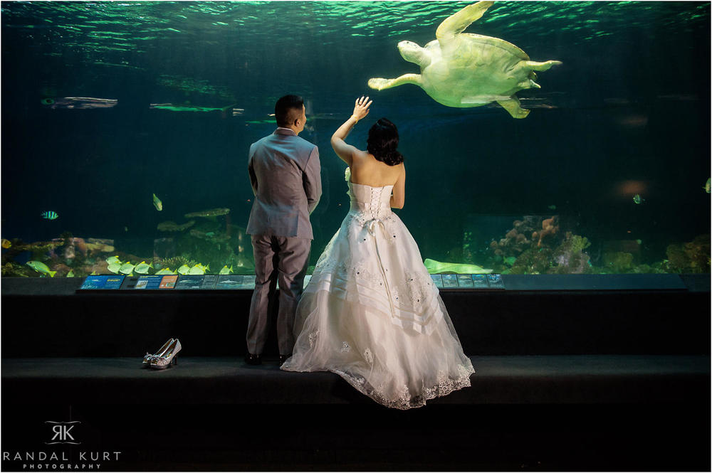 23-vancouver-aquarium-wedding-photography.jpg