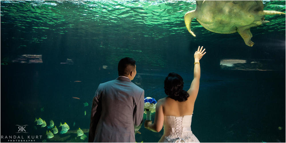 24-vancouver-aquarium-wedding-photography.jpg