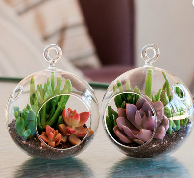 Terrarium by Shop Succulents