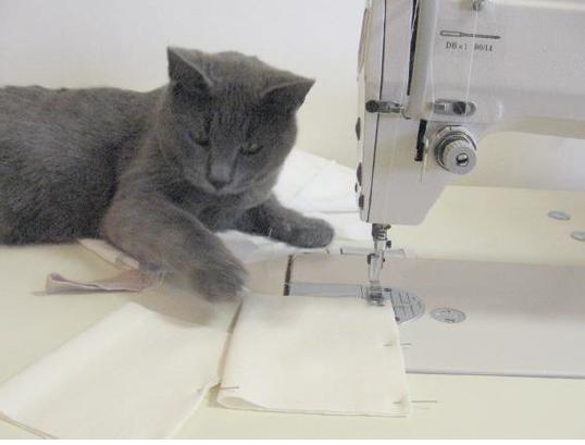 Cat, meet sewing machine.
