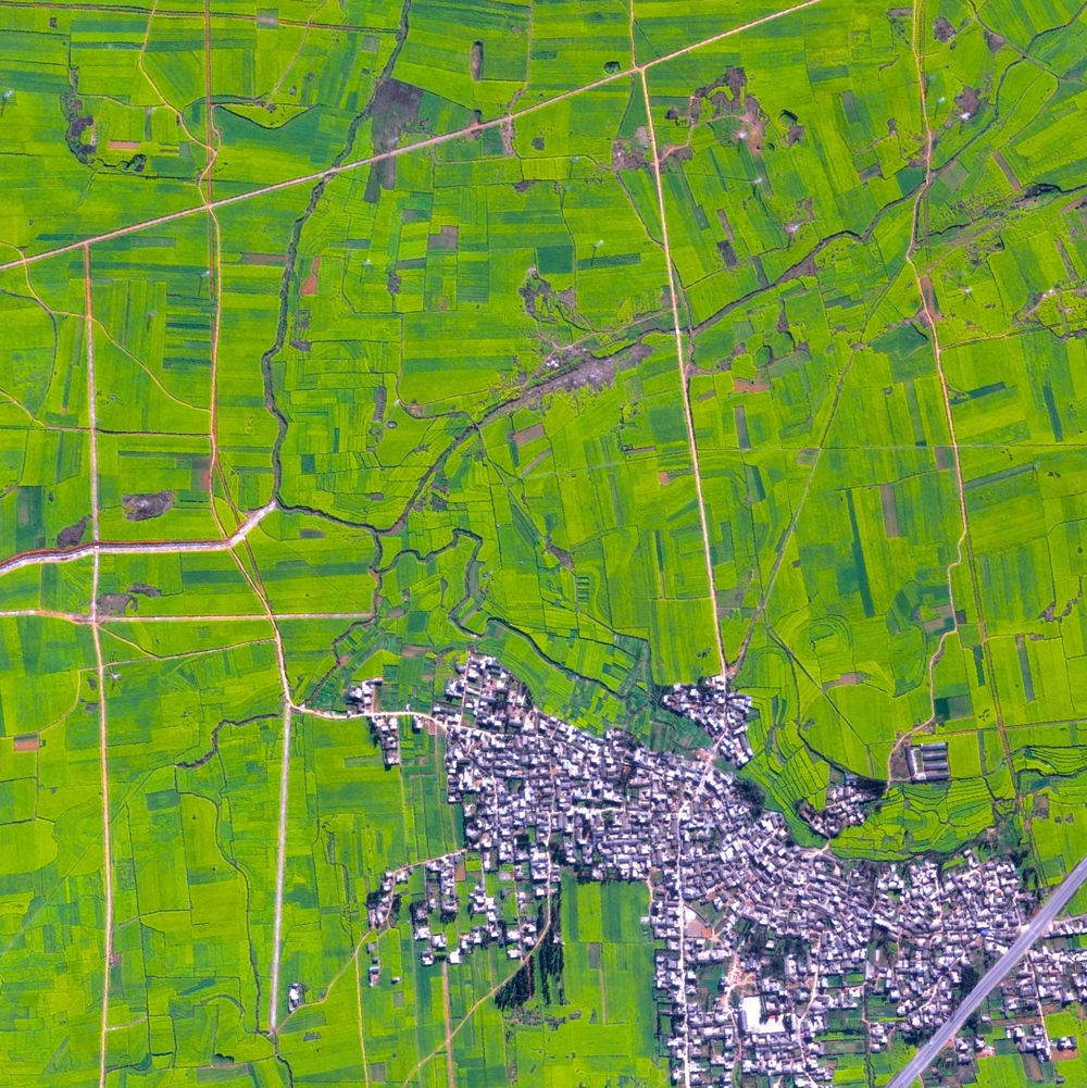 7/25/2015 Canola Flower Fields Luoping County, China 24°53′06″N 104°18′29″E   Canola flower fields cover the landscape of Luoping County, China. The crop is grown for the production of oil, which is extracted by slightly heating and then crushing the flower seeds. Canola oil is primarily used for cooking purposes and as a source of biodiesel.