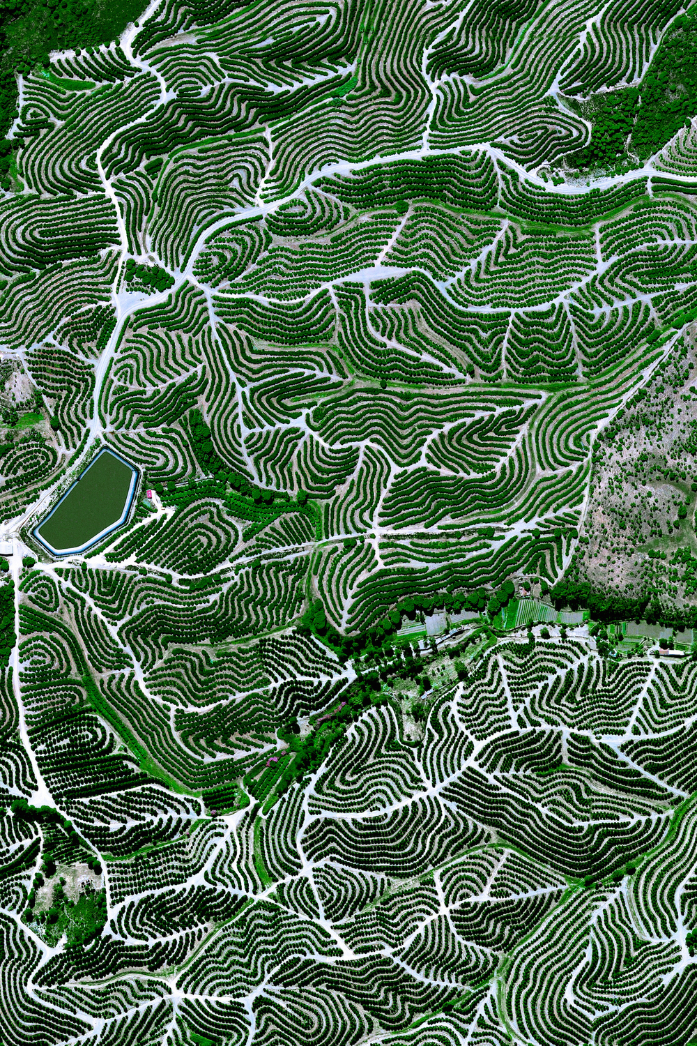 6/5/2016 Fruit orchards Huelva, Spain 37.714546°, -6.532834°   Fruit trees swirl on the hills of Huelva, Spain. The climate here is ideal for this growth with an average temperature of 17.8° C (64° F) and a relative humidity between 60% and 80%.