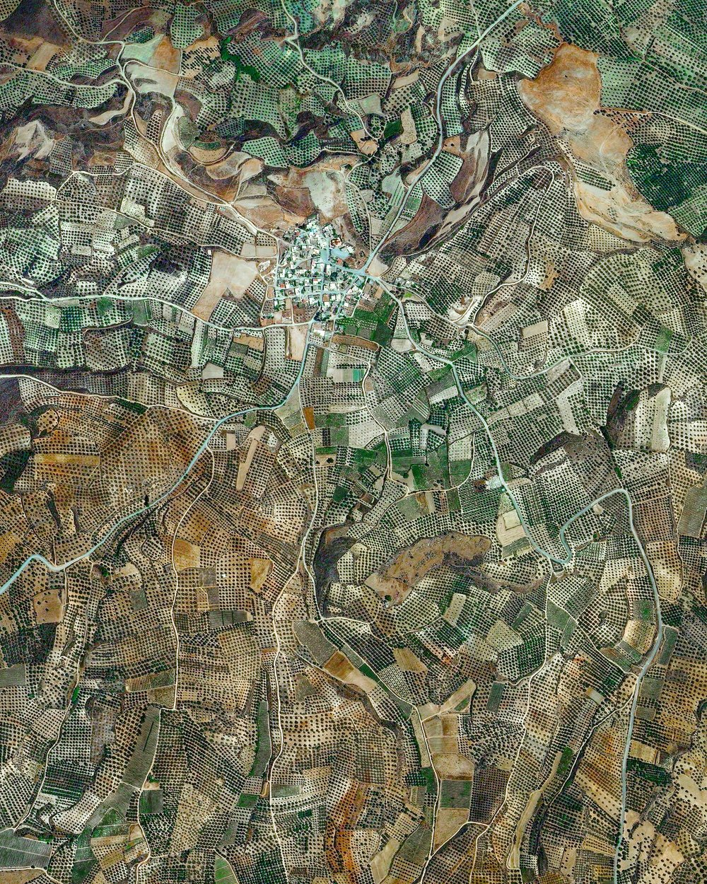 Olive tree groves surround the village of Ινία, Greece. Approximately 90% of all harvested olives are turned into oil; the remaining 10% are eaten as table olives.  35.0785246, 25.0473918  Source imagery: DigitalGlobe