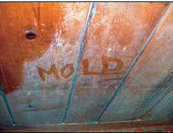Yuck! Mold Can Be A Huge Problem.