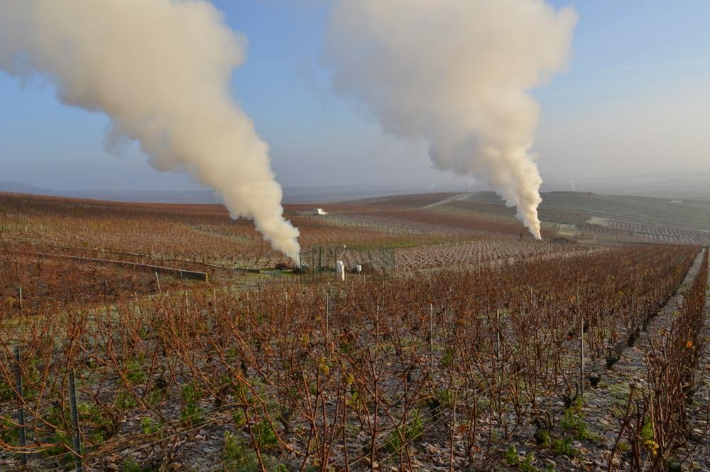 Les fumerolles et la taille des vignes en novembre (Photo TLQ)