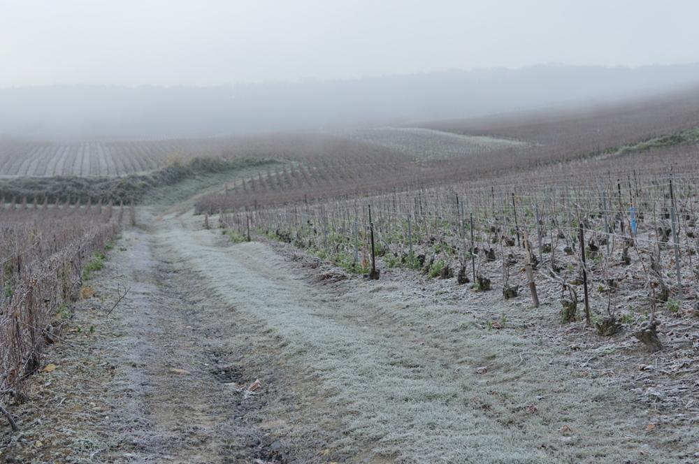 La côtes des blanc et son manteau d'hiver (Photo TLQ)