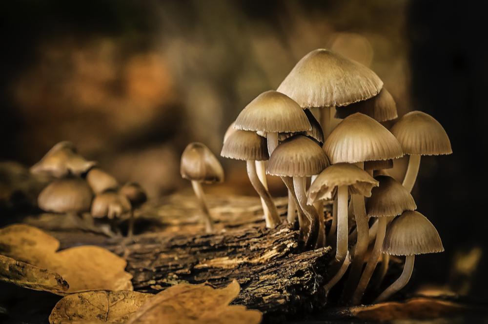Fungi at Daybreak