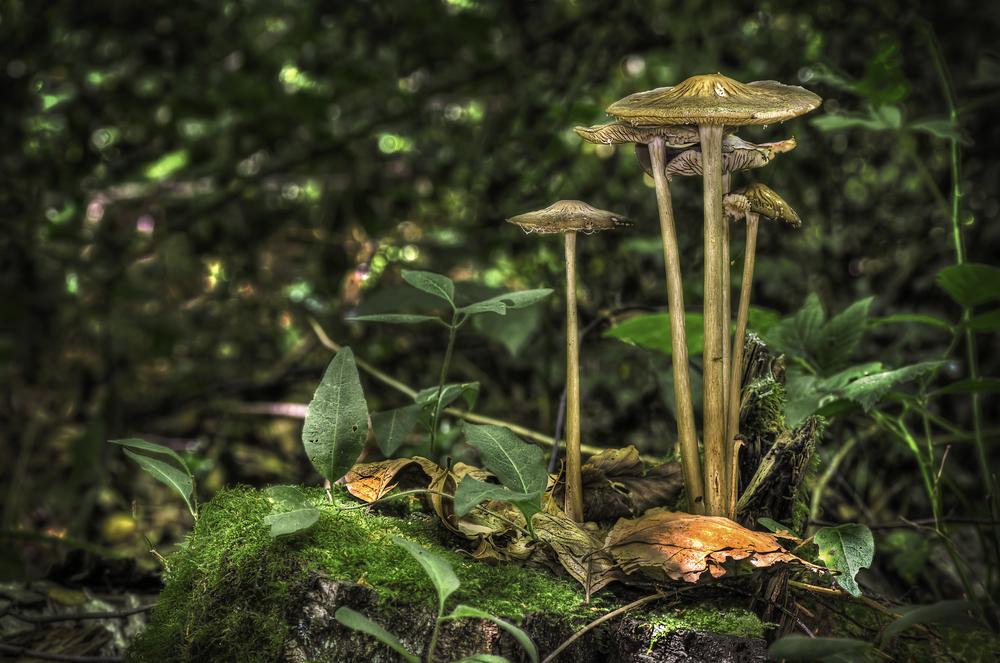Long Tall Fungi