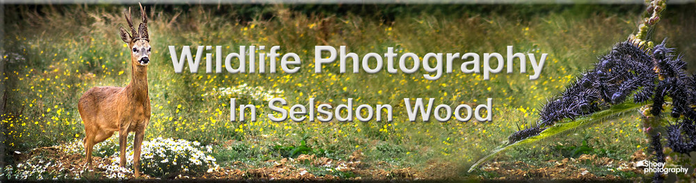 Wildlife Photography in Selsdon Woods Banner
