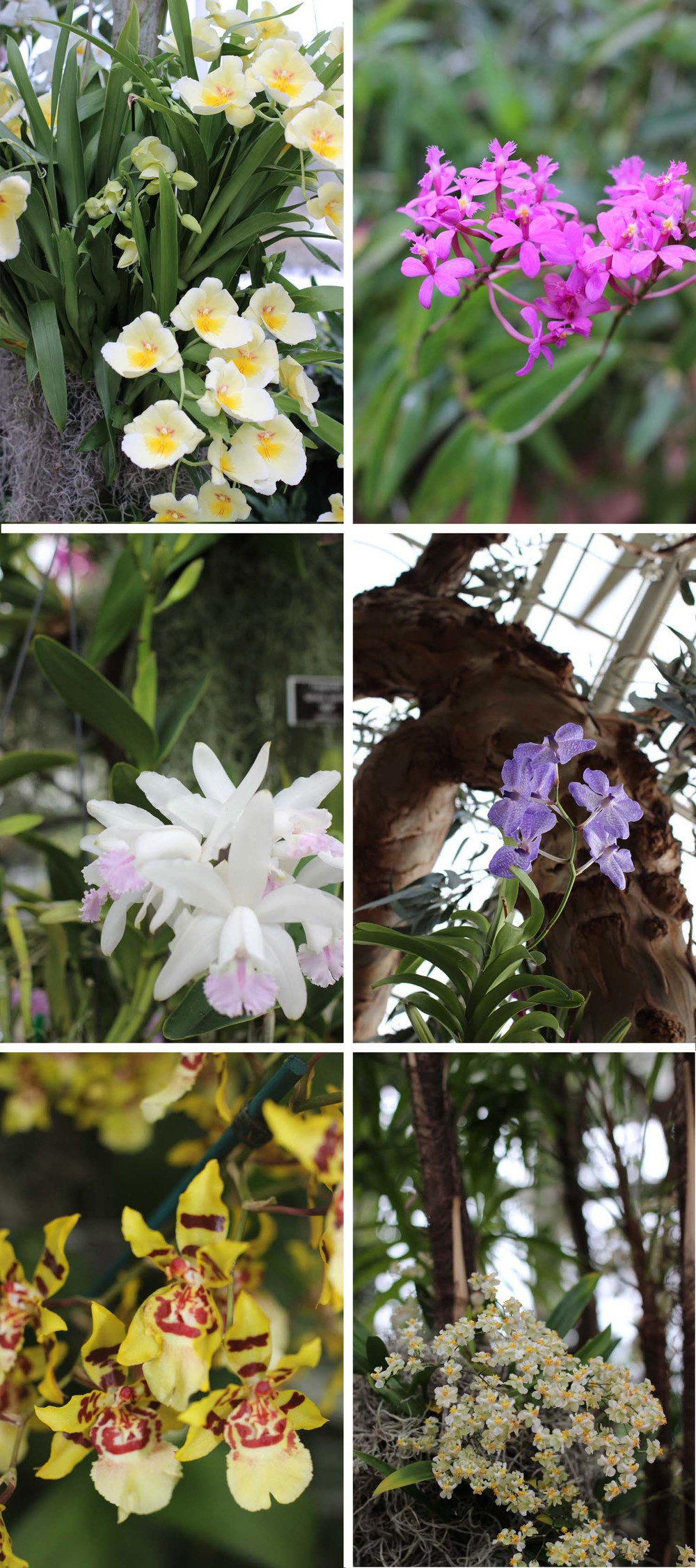 New York Botanical Garden Orchid Show; Image:  Laura Messersmith