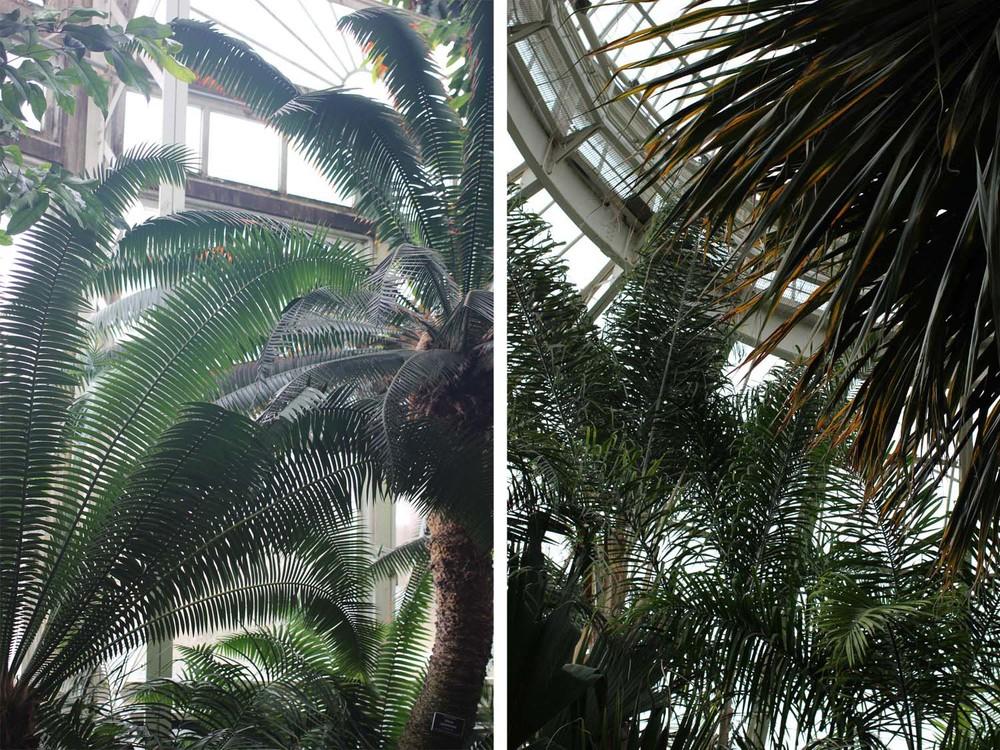 Palms; Haupt Conservatory; Image:Laura Messersmith