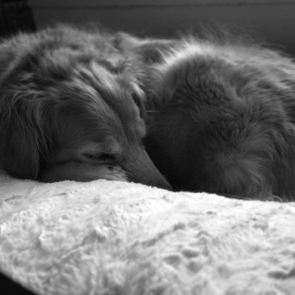 Maddie-pup, Image: Laura Messersmith