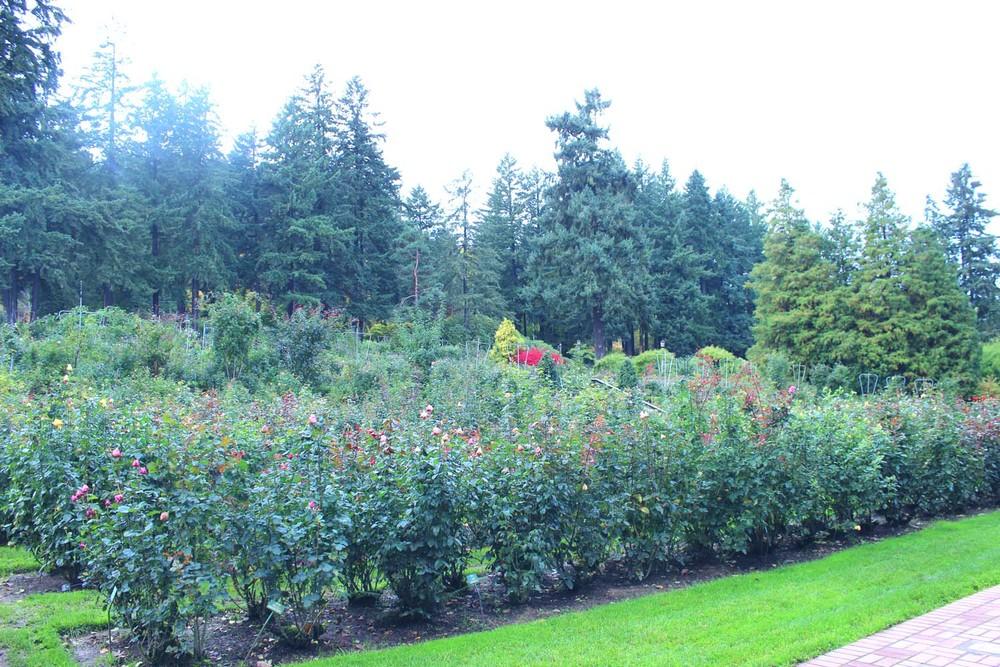 International Test Garden, Portland | Image: Laura Messersmith