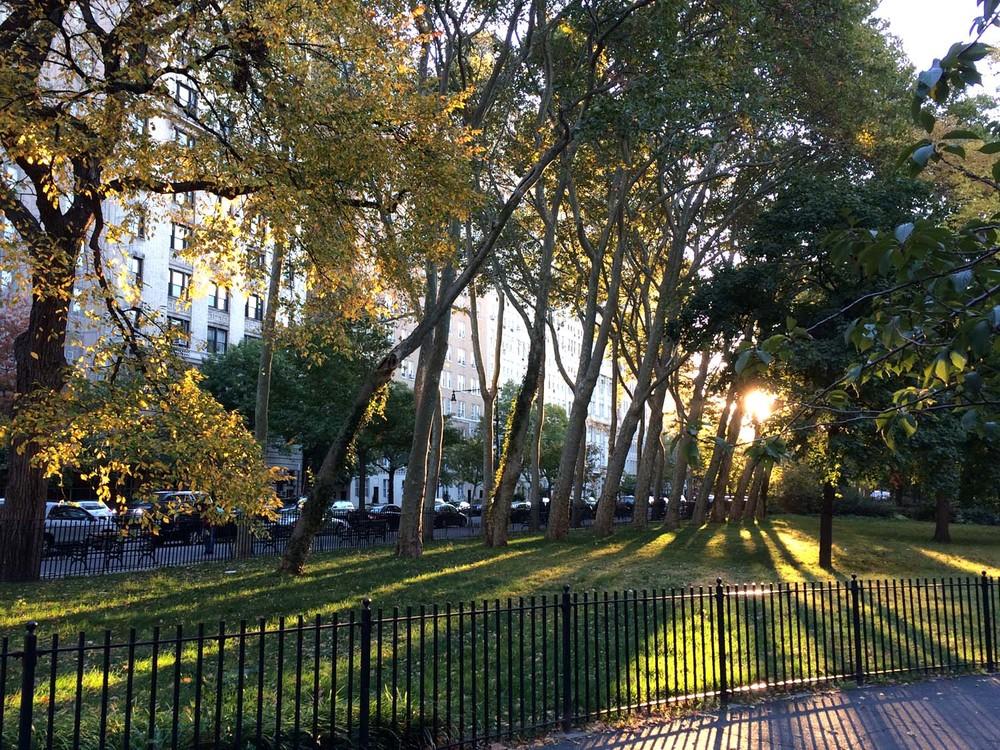 Rooseveldt Park New York, NY