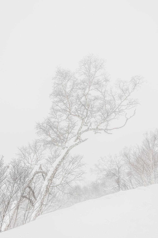 Leica_SL_ERICCHENRR_1.jpg