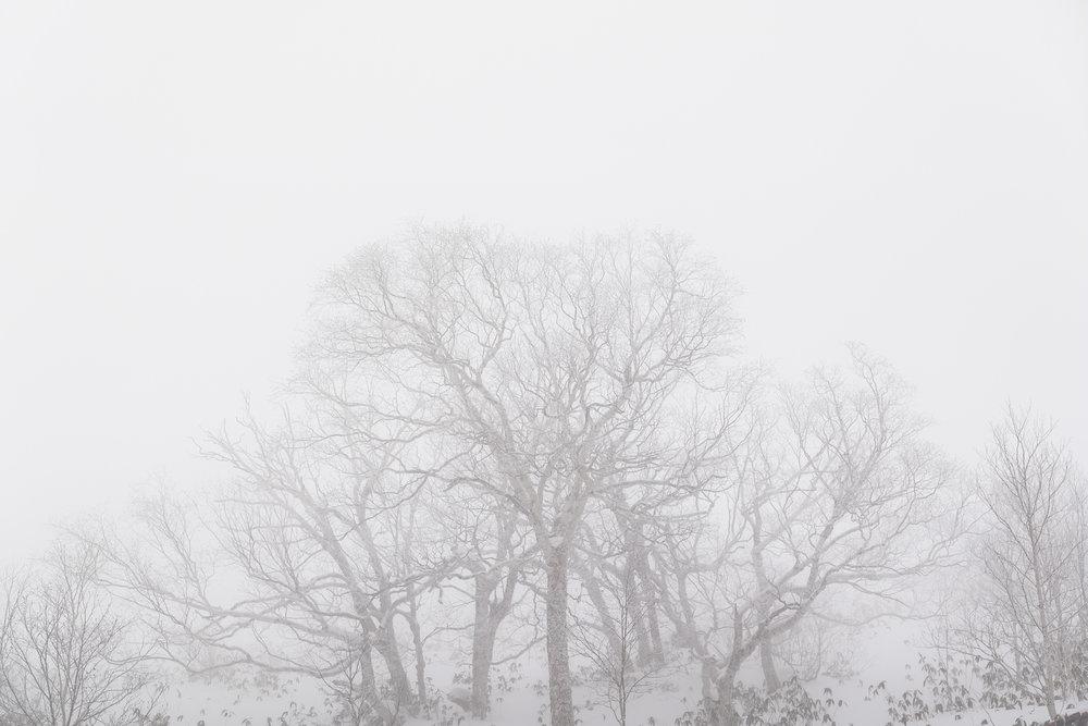 Leica_SL_ERICCHENRR.jpg