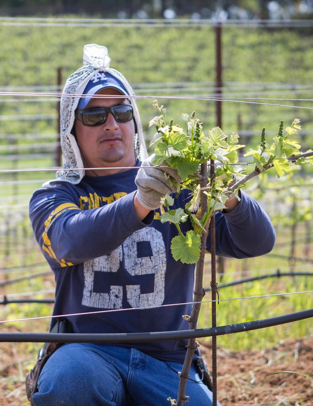 Arturo Garcia, Vineyard Team Member