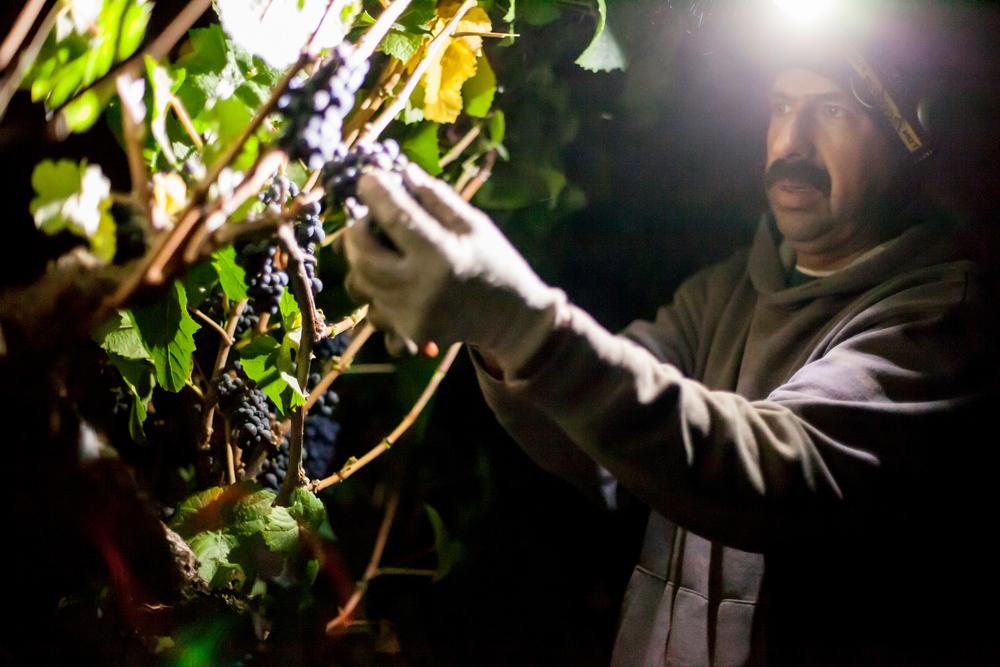 Tino Flores, Cellar and Vineyard Team Member