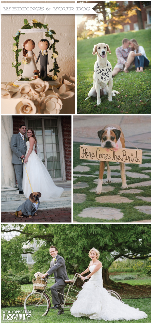 dog+wedding.jpg