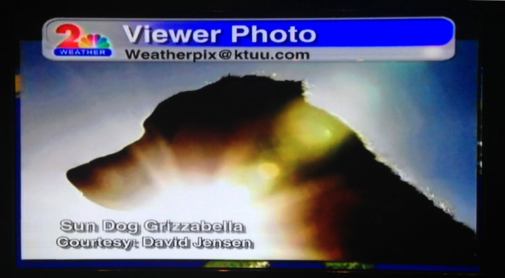 Grizzabella.  As featured on KTUU's News Hour Weatherpix.  Thank you, Jackie Purcell.  You are a gift to Alaska.